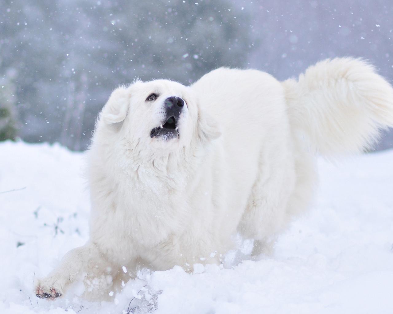животное, собака, пёс, природа, зима, снег