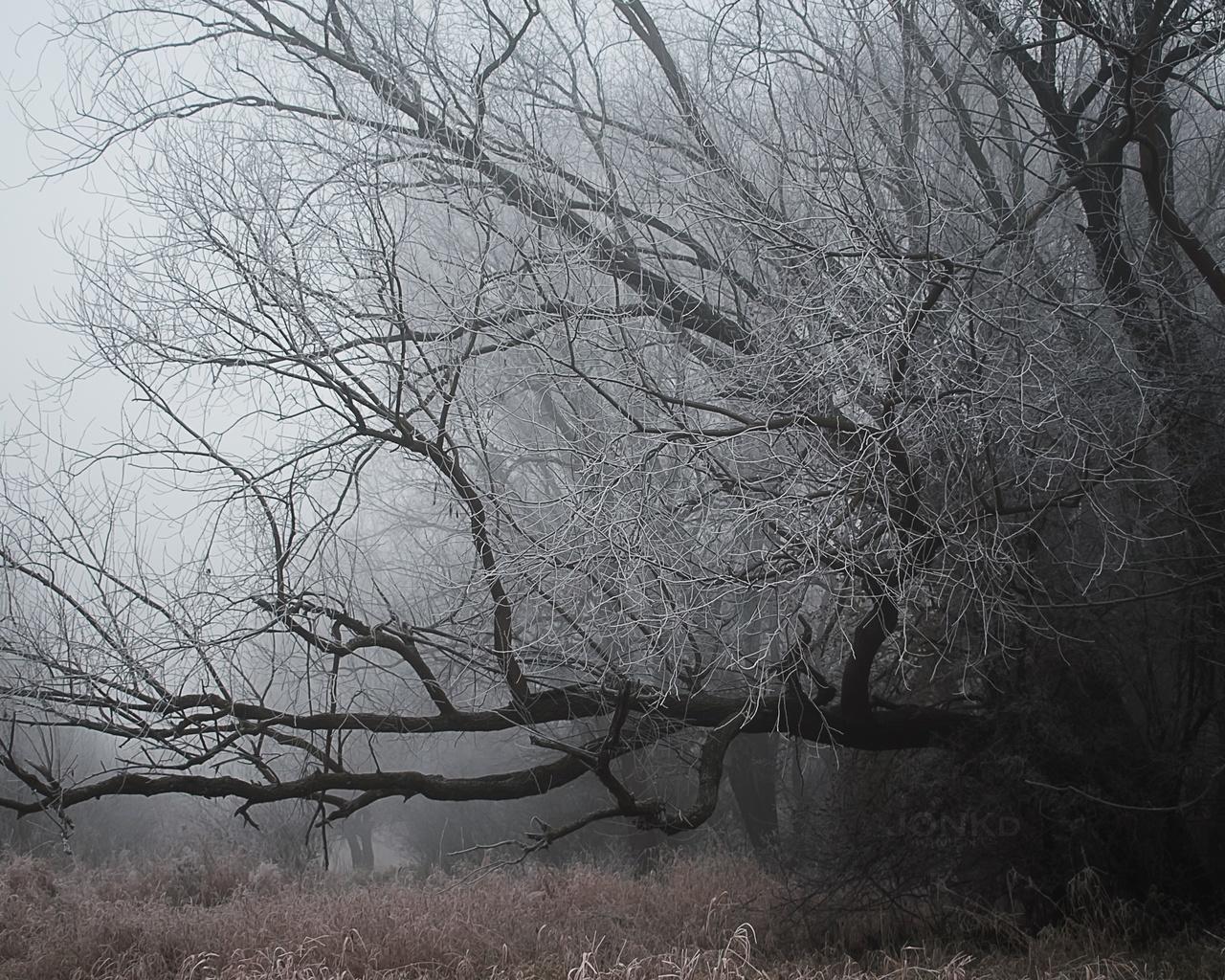 деревья, мороз, трава, туман, холод