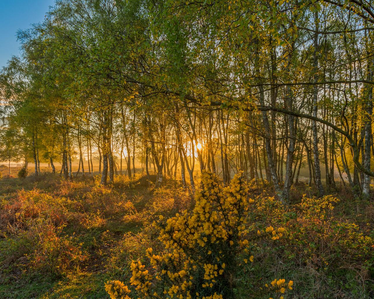англия, парк, осень, rockford new forest national park, деревья, природа