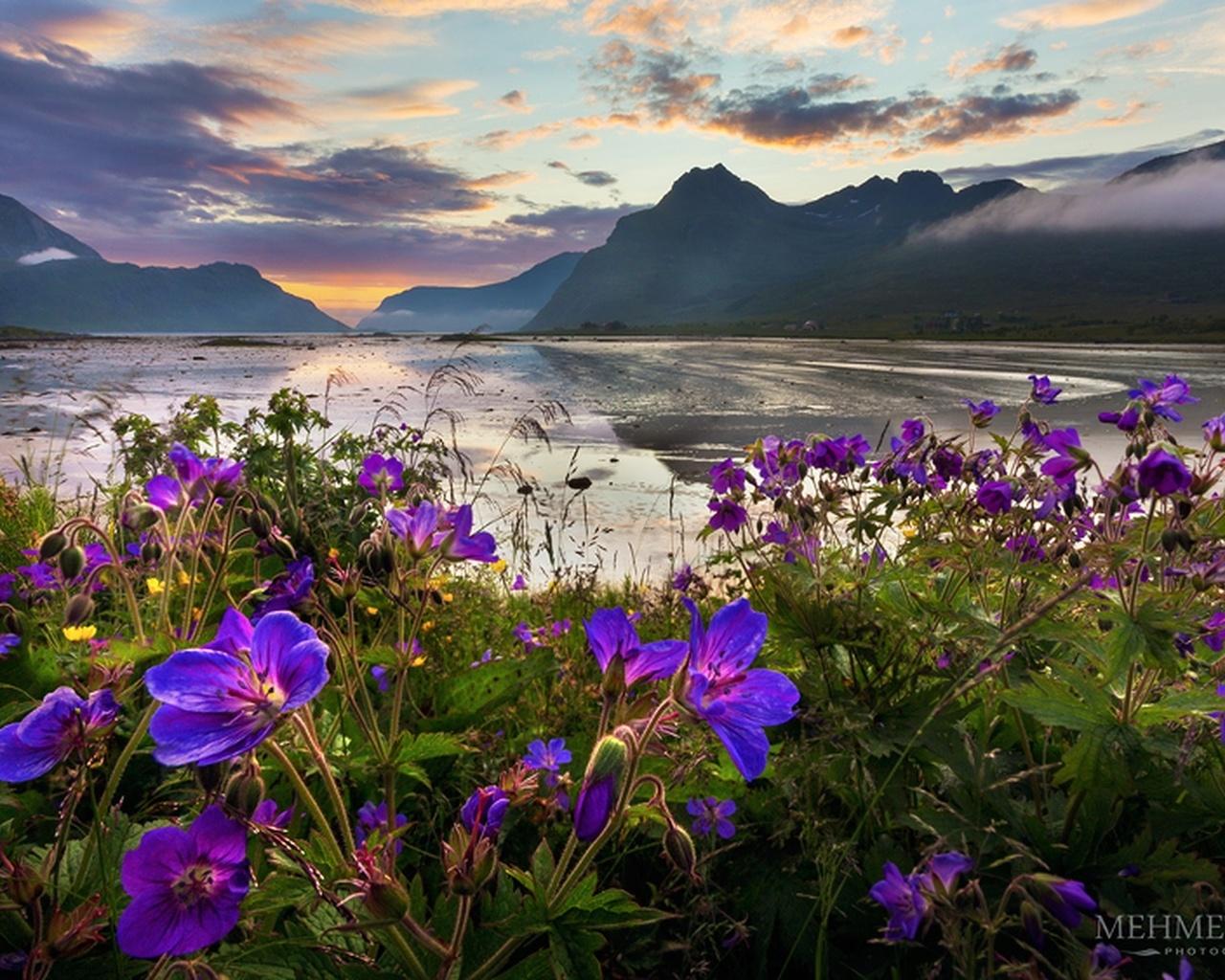 природа, пейзаж, горы, море, берег, цветы, вечер, mehmet eralp