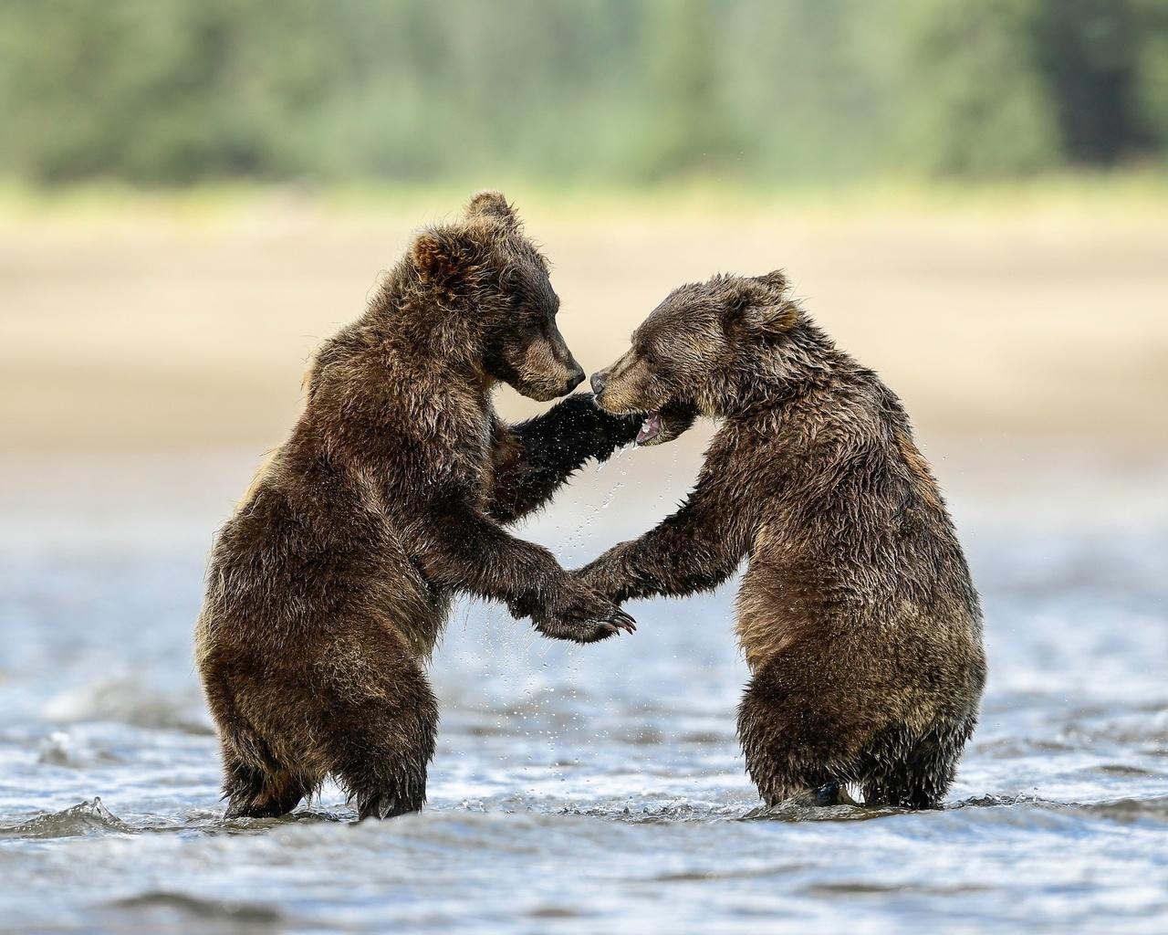 животные, хищники, медвежата, детёныши, пара, природа, вода