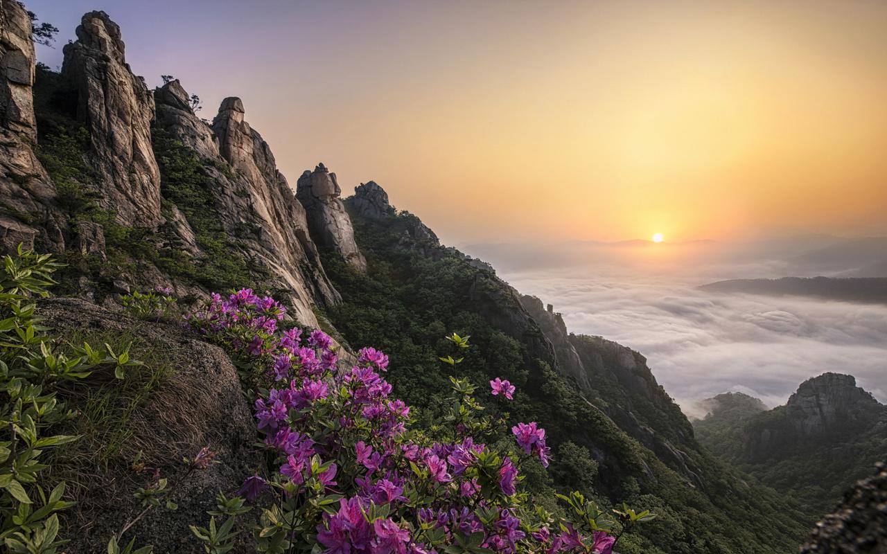 облака, пейзаж, цветы, горы, природа, туман, скалы, рассвет, растительность, утро, корея, заповедник, рододендрон, азалия, jae youn ryu, волчулсан, рододендрон