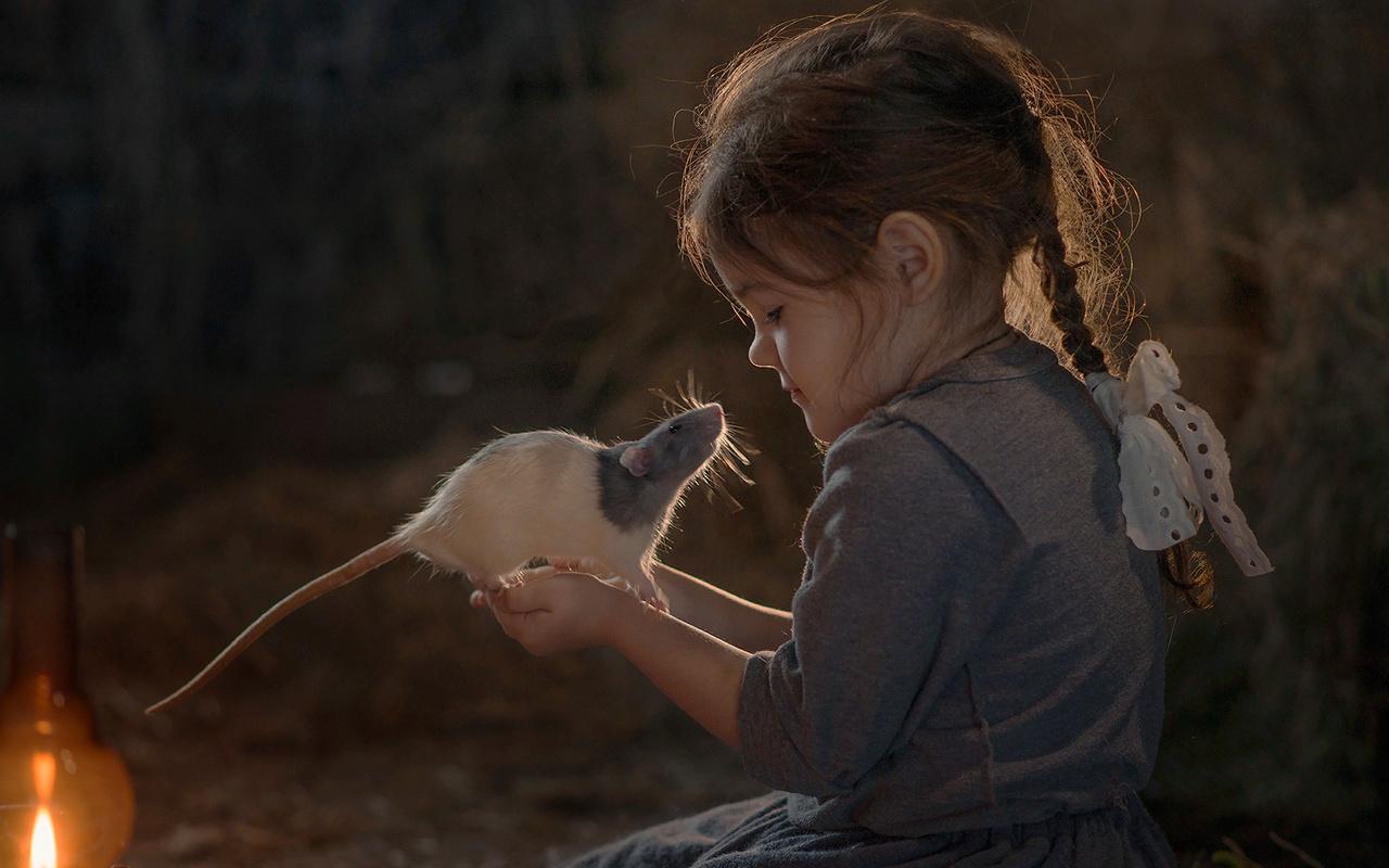 елена миронова, ребёнок, девочка, платье, косичка, животное, грызун, крыса, питомец, лампа