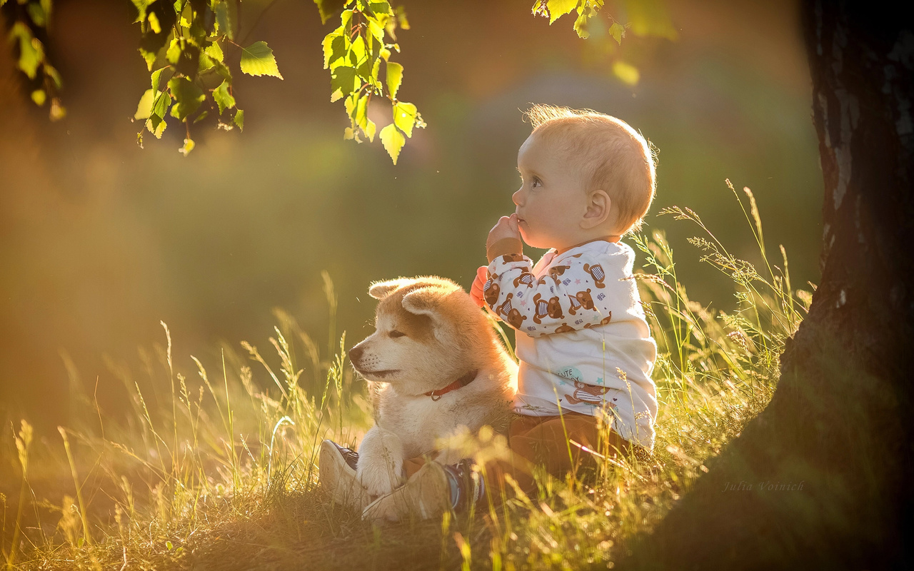 лето, трава, листья, ветки, природа, дерево, животное, собака, мальчик, малыш, щенок, берёза, ребёнок, julia voinich, юлия войнич