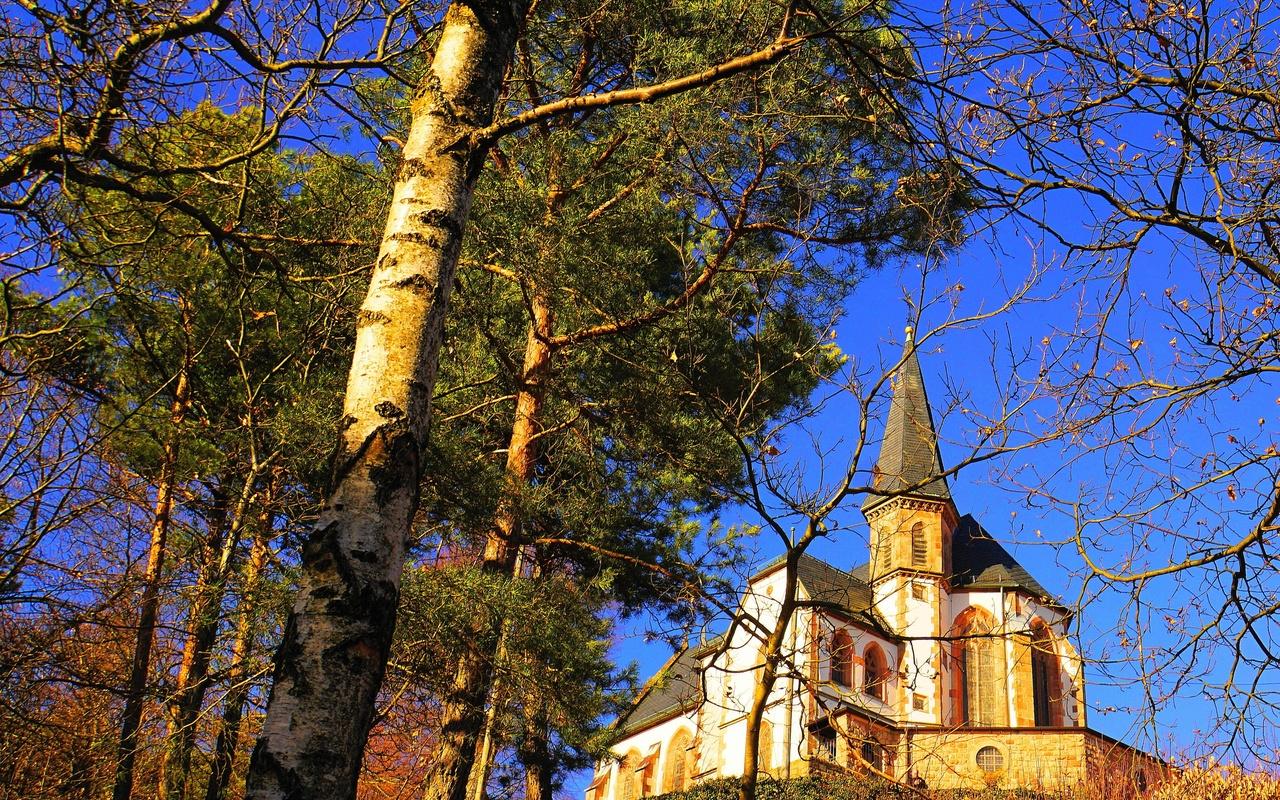 деревья, ветки, церковь