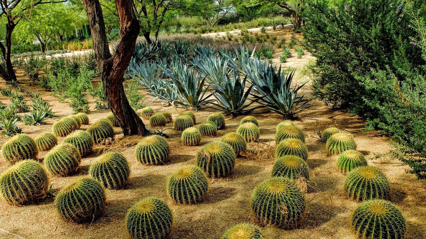 сша, калифорния, природа, парк, растения, кактусы, деревья