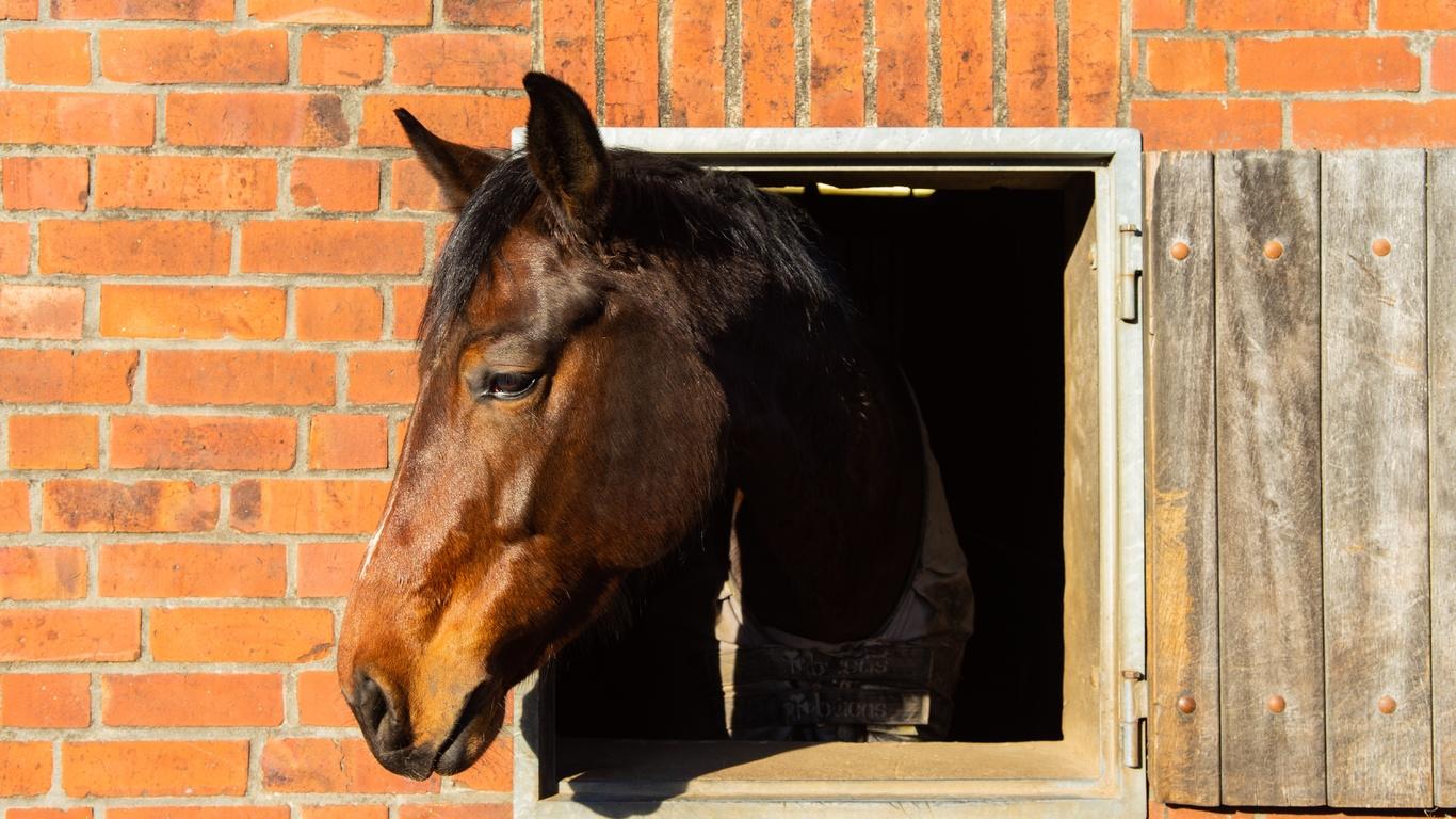 окно, лошадь, стена