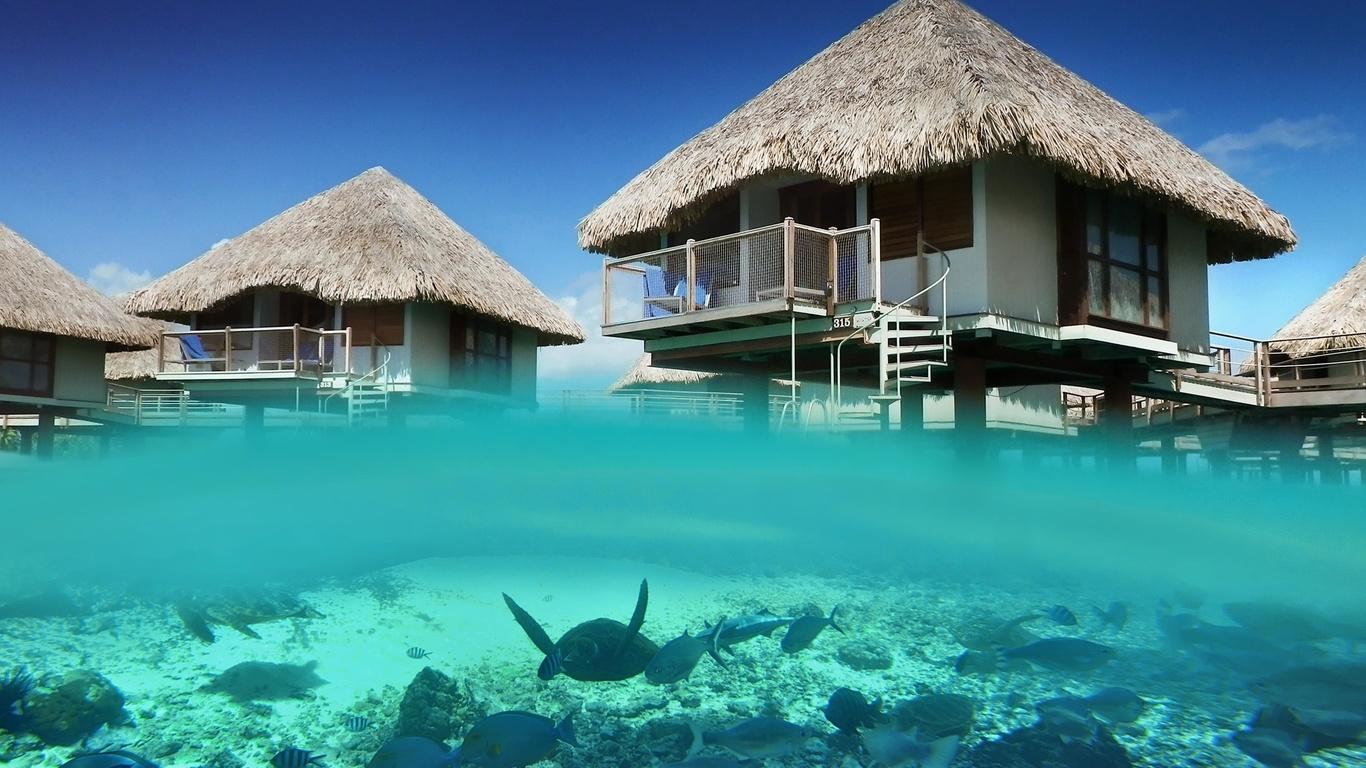 природа, океан, лагуна, бунгало, рыбы, тропики, черепаха