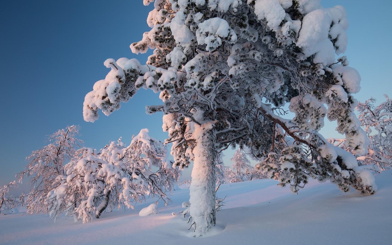 природа, пейзаж, зима, снег, деревья, дерево, сосна