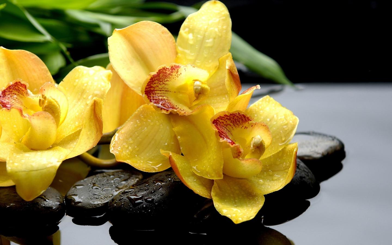 орхидеи, капли, камни, вода, экзотика