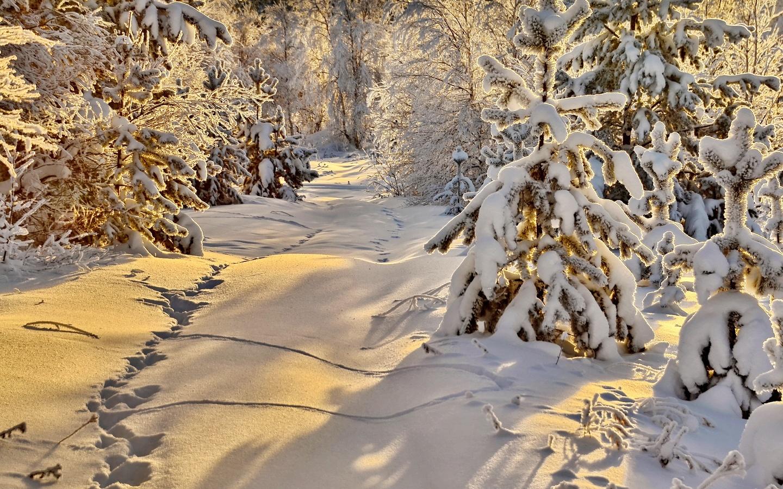 зима, снег, природа, ель