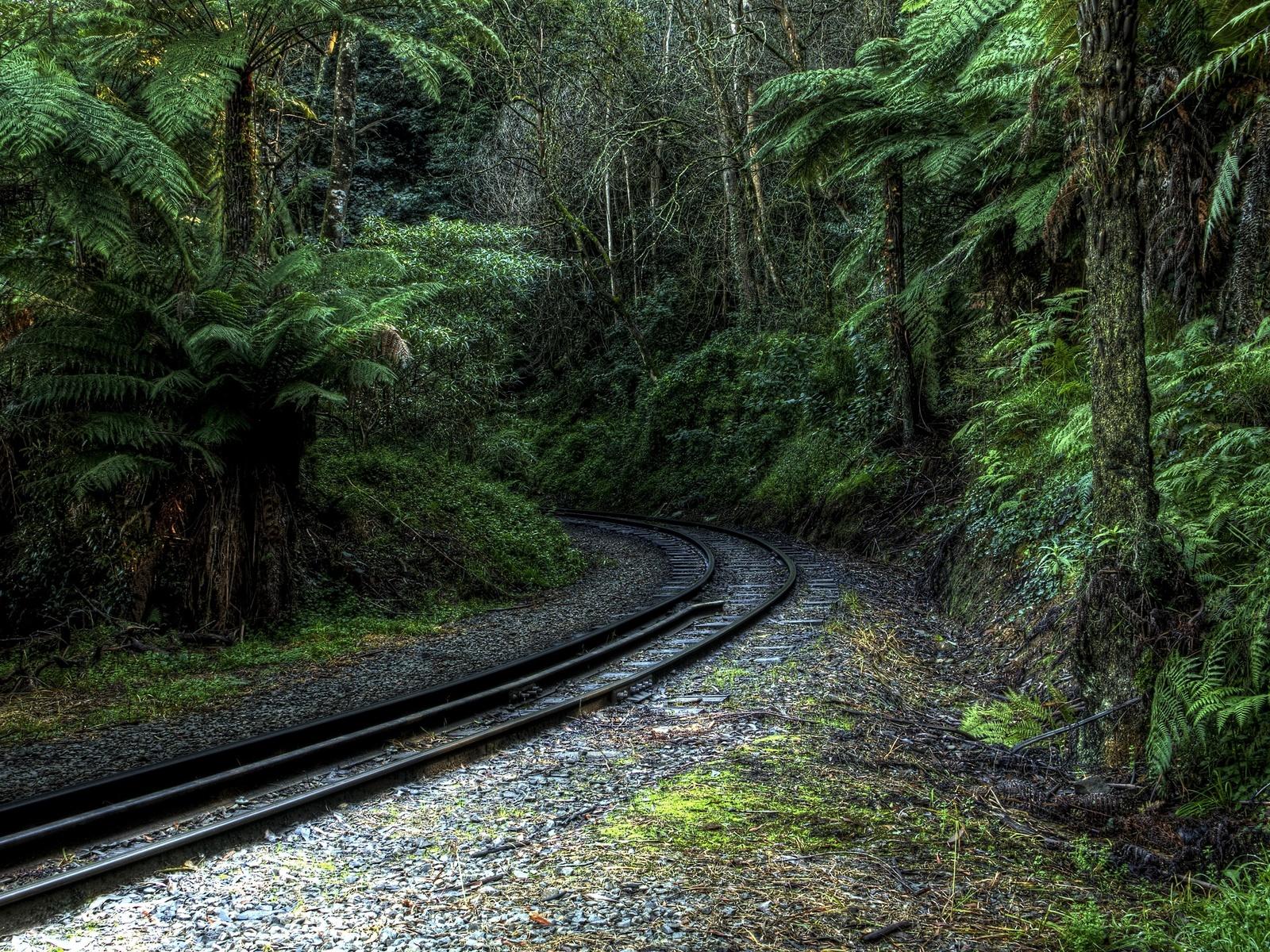 деревья, железная дорога, тропический, лес