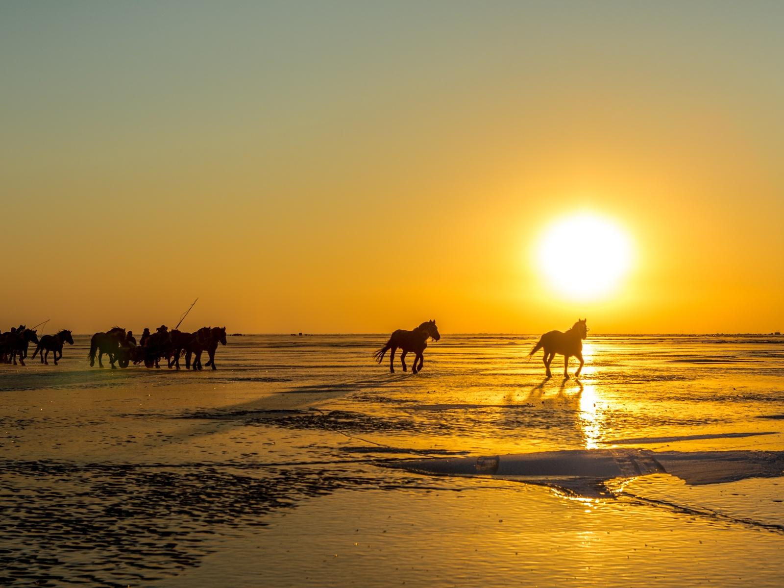 лошади, солнце, снег, животные