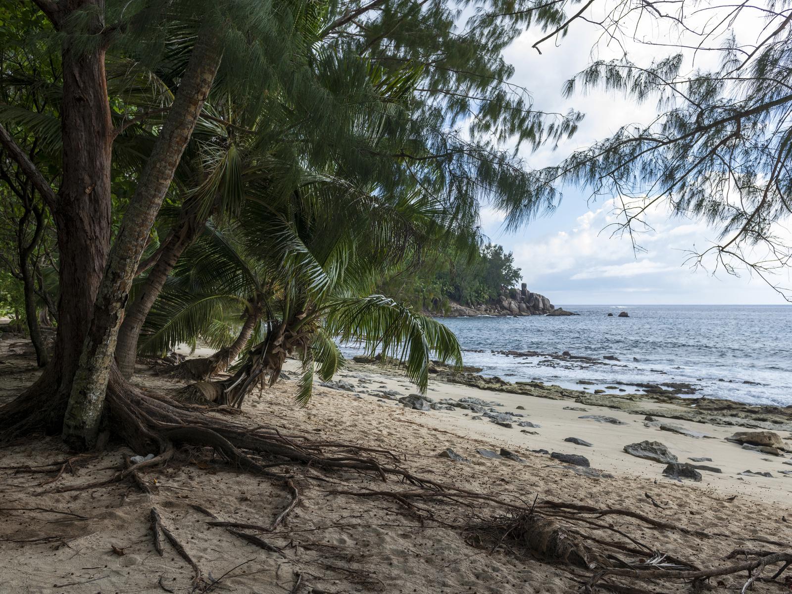 тропики, берег, побережье, police beach seychelles, пальмы, пляж, природа