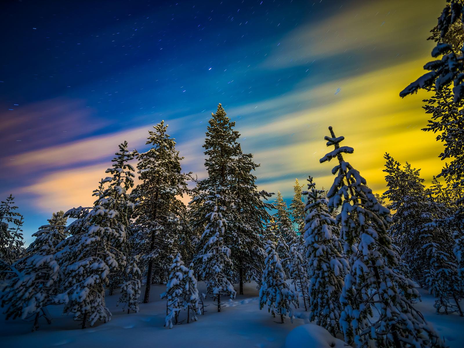 природа, пейзаж, зима, лес, снег, деревья, ели, северное сияние, звёзды, финляндия, лапландия