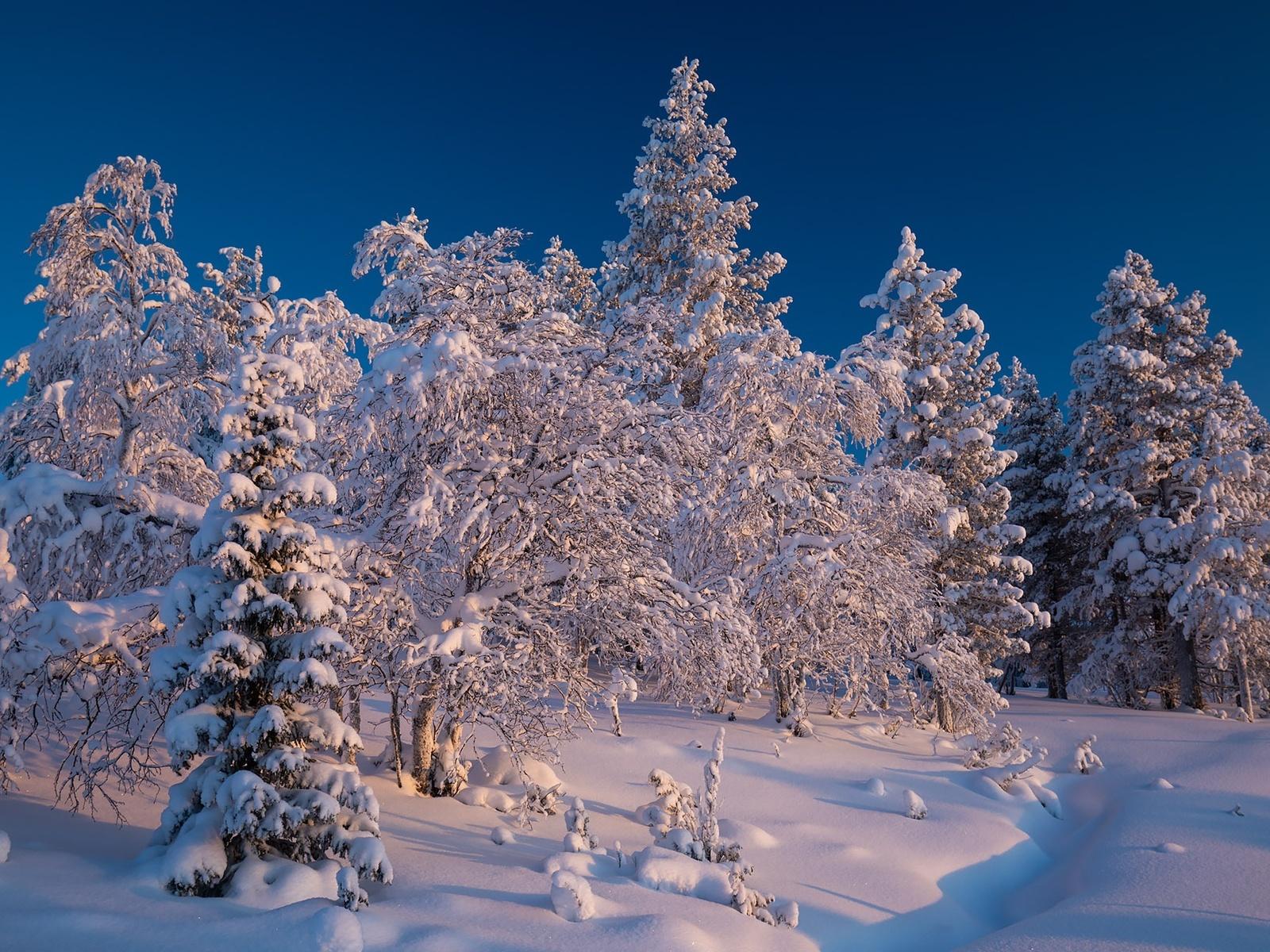 природа, пейзаж, зима, снег, деревья, ели, сугробы, финляндия, лапландия