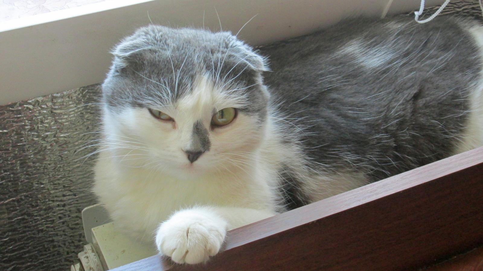 кошка, морда, усы