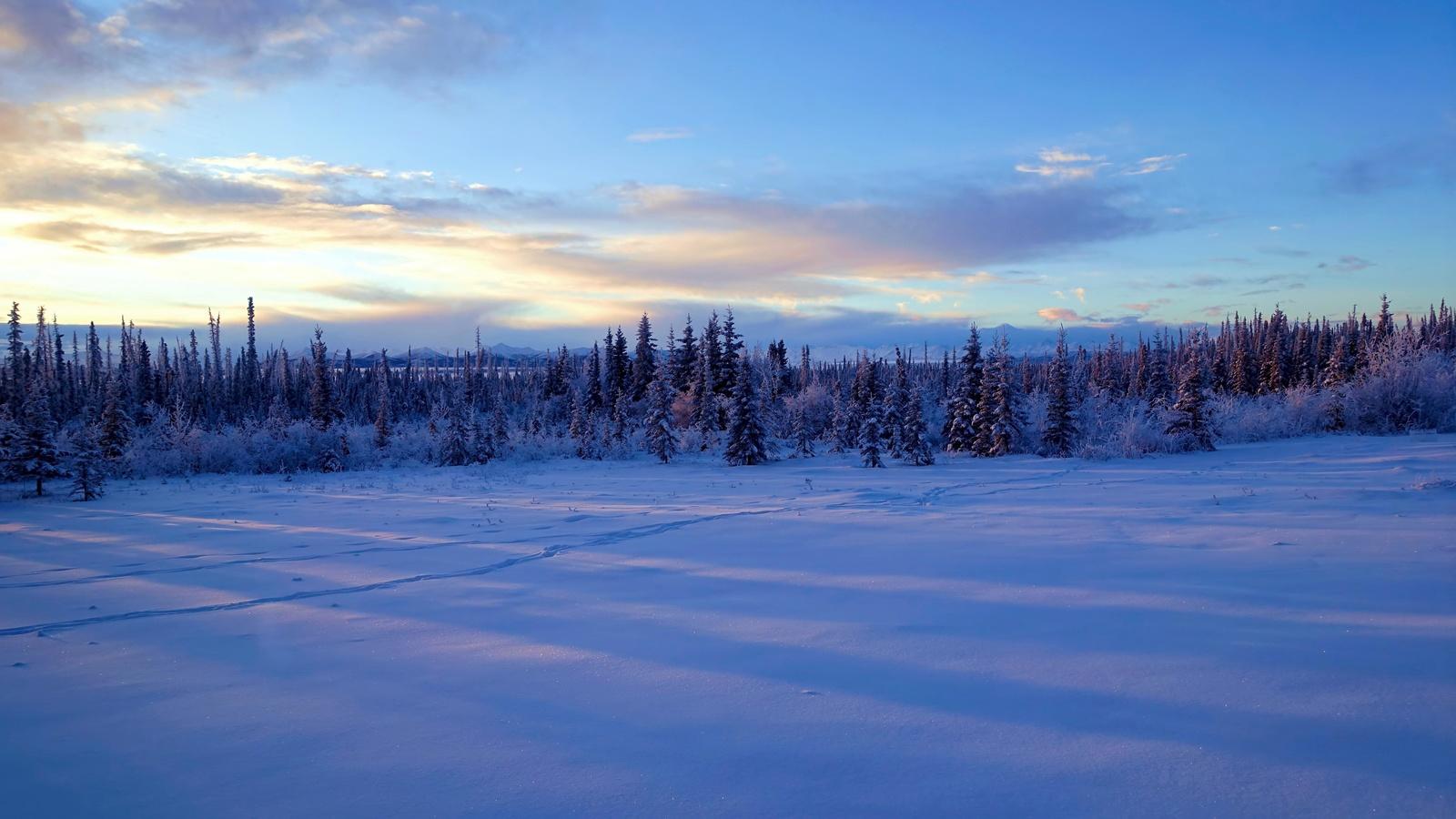аляска, зима, закат, деревья, пейзаж