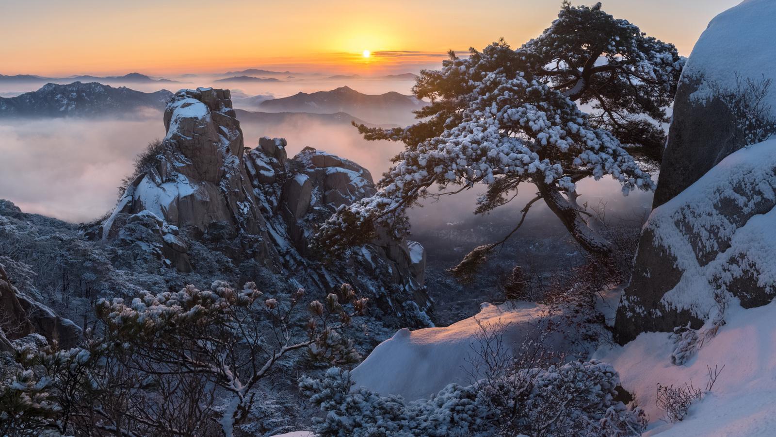 зима, облака, снег, деревья, пейзаж, горы, природа, туман, восход, скалы, рассвет, утро, сосны, корея, заповедник, jae youn ryu, пукхансан