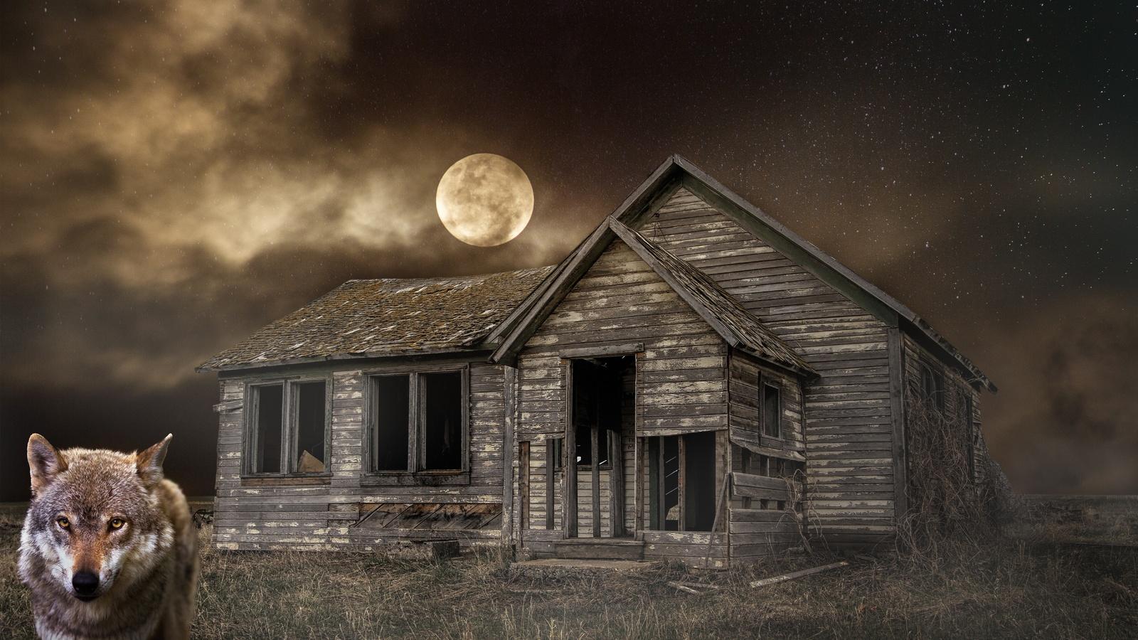 ночь, луна, дом, заброшенный., волк
