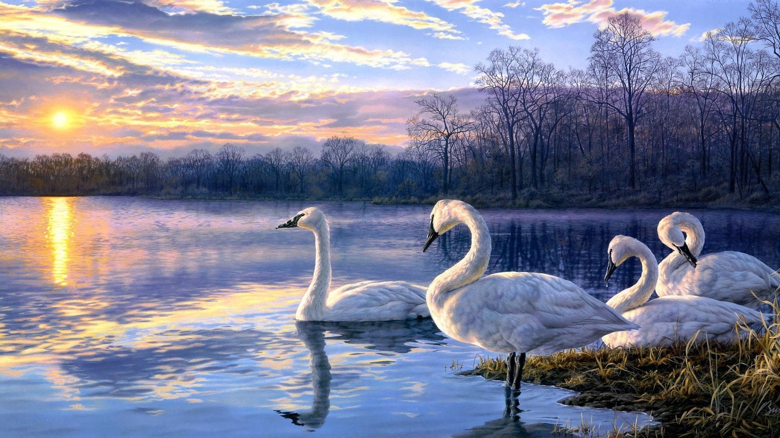 живопись, лебедь, озеро, сансет, пейзаж