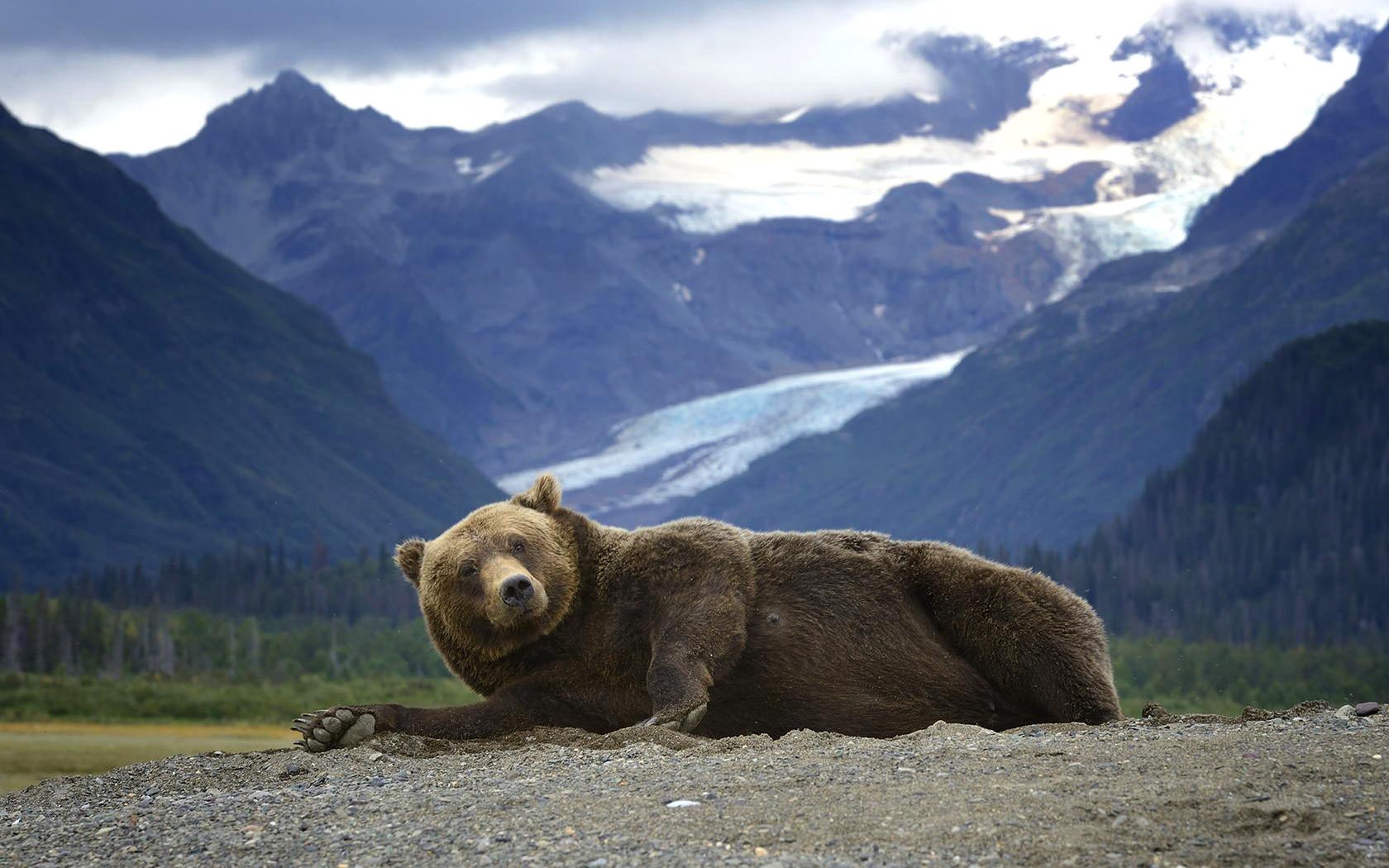 животное, хищник, медведь, гризли, природа, аляска, горы
