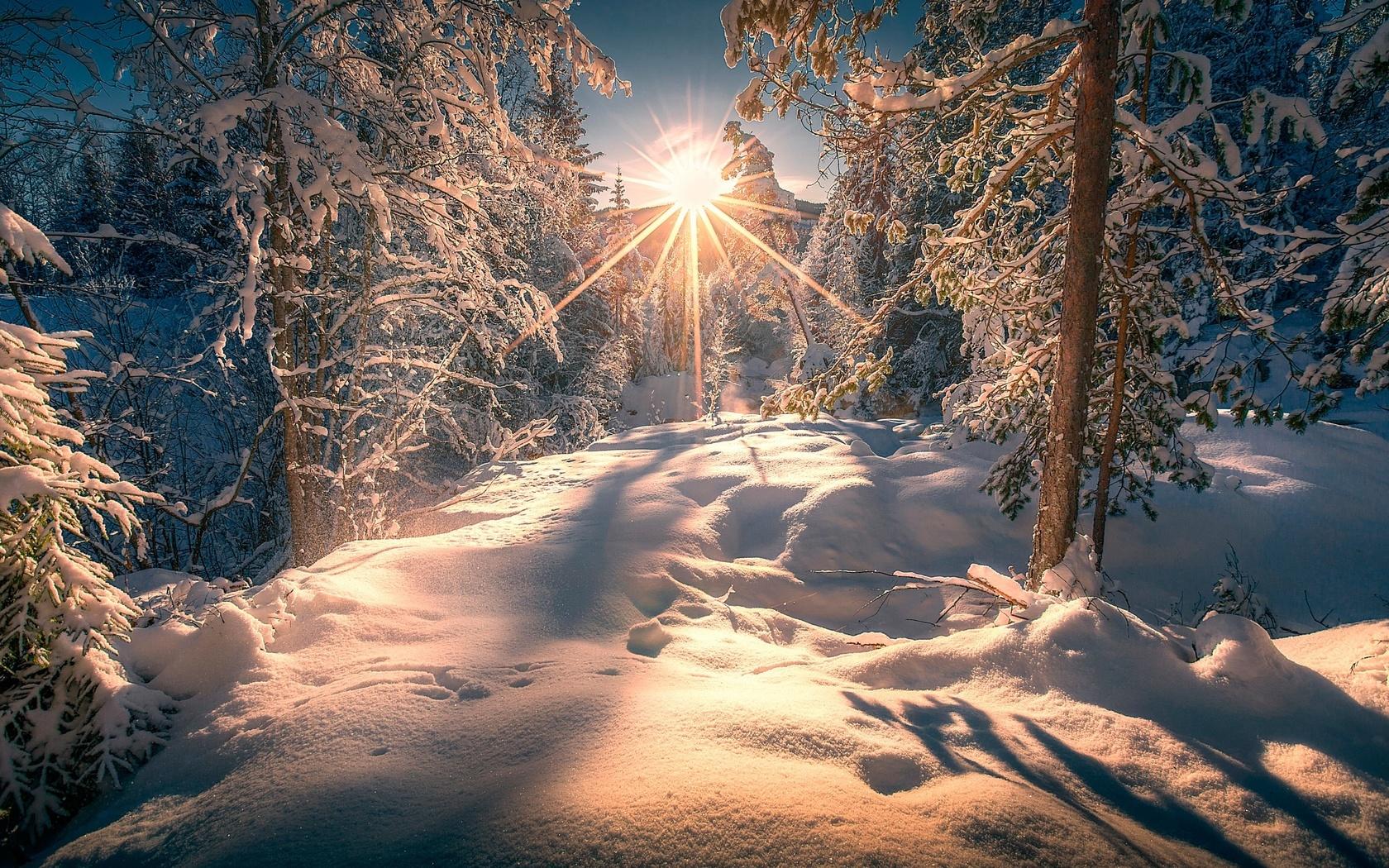 природа, пейзаж, зима, лес, солнце, лучи, снег, деревья, сугробы, тени