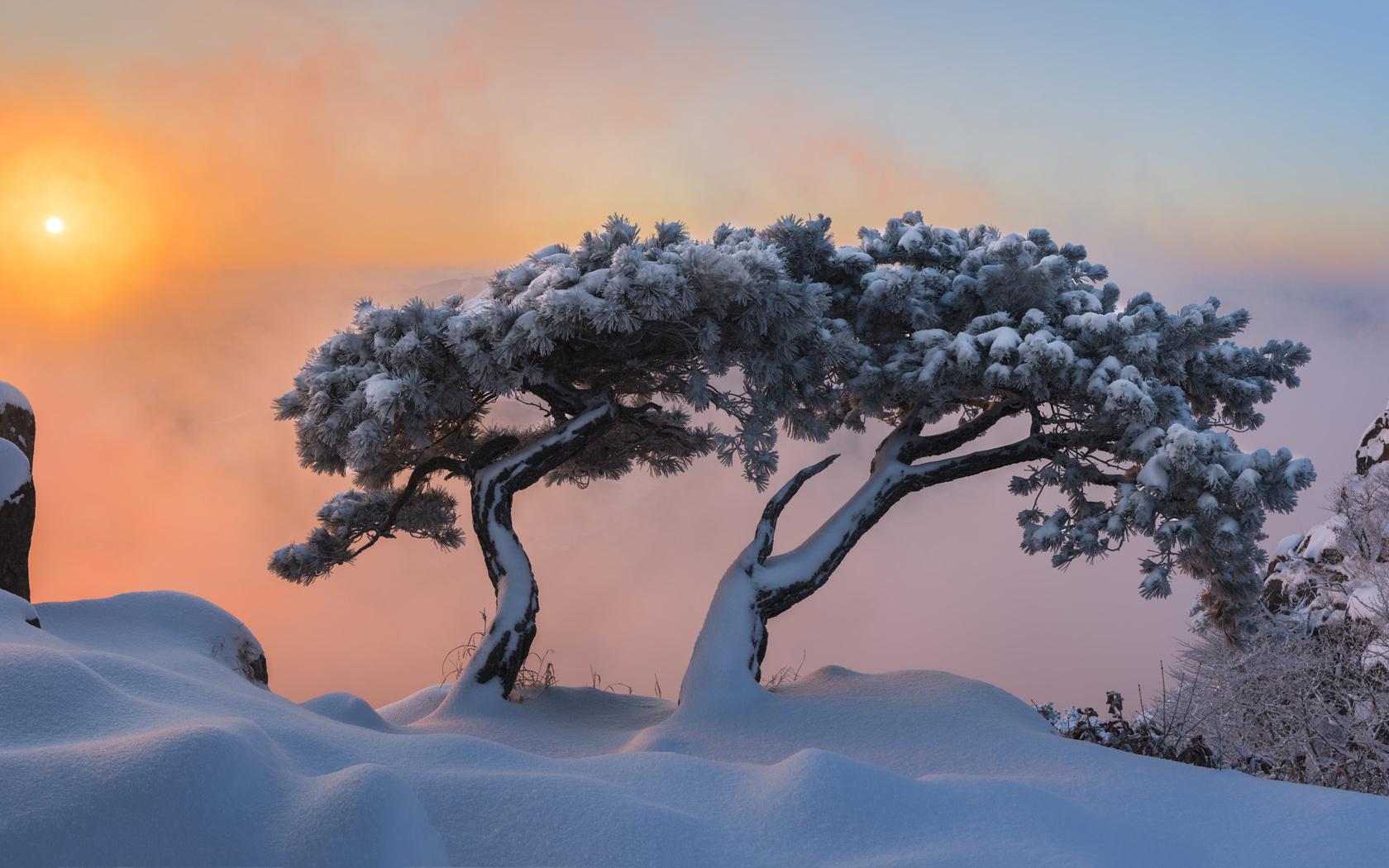 зима, снег, деревья, пейзаж, горы, природа, рассвет, утро, сосны, корея, jae youn ryu, заповедник, пукхансан