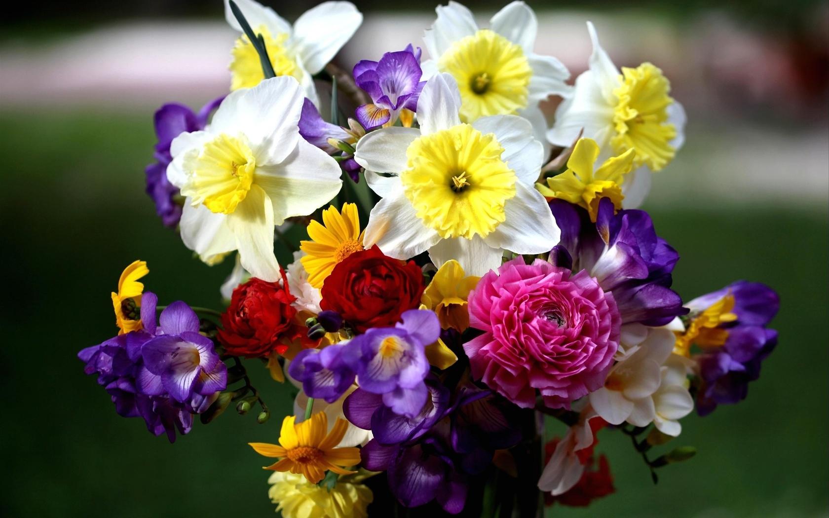 Поздравления, картинки красивых цветов и букетов