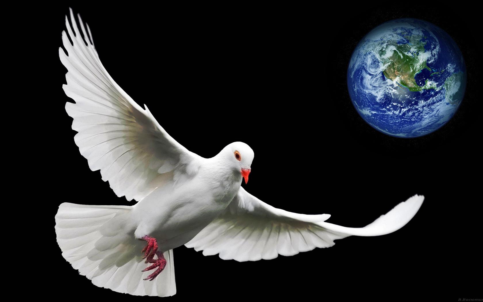 голубь, символ, мира, планета, земля, крылья,клюв,оперение,белый,глаза,лапки,красные,красиво