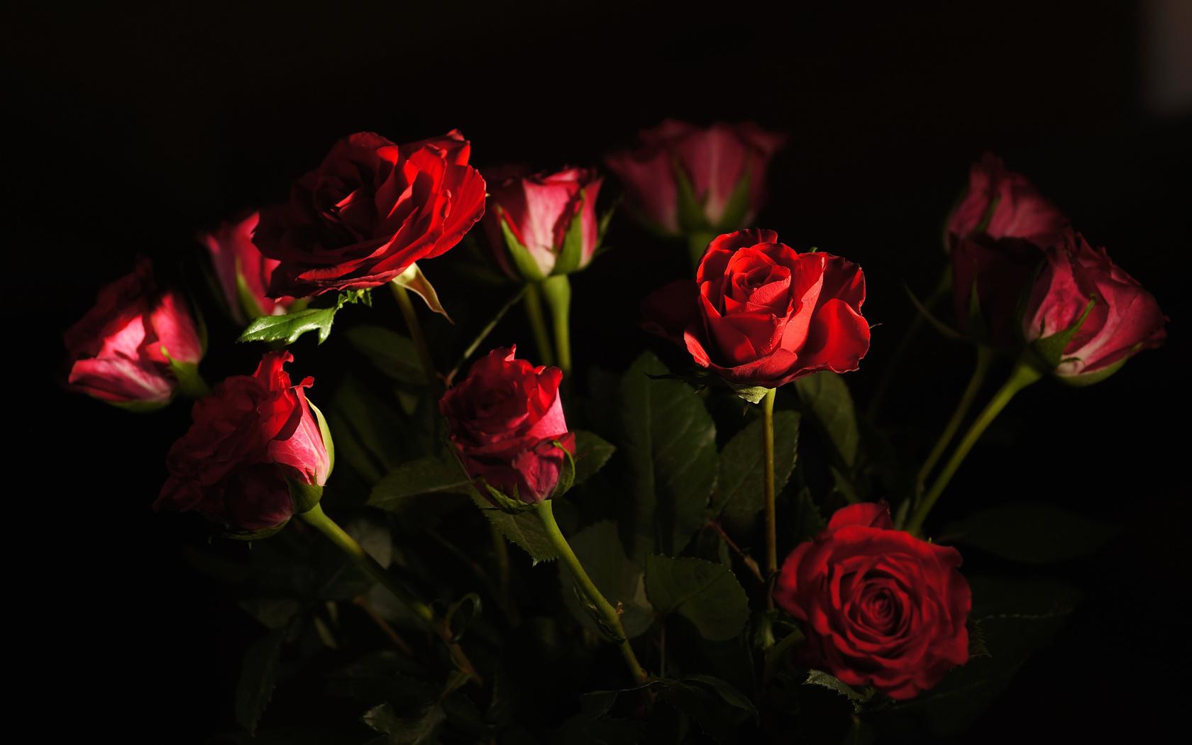 цветы, букет, розы, свет