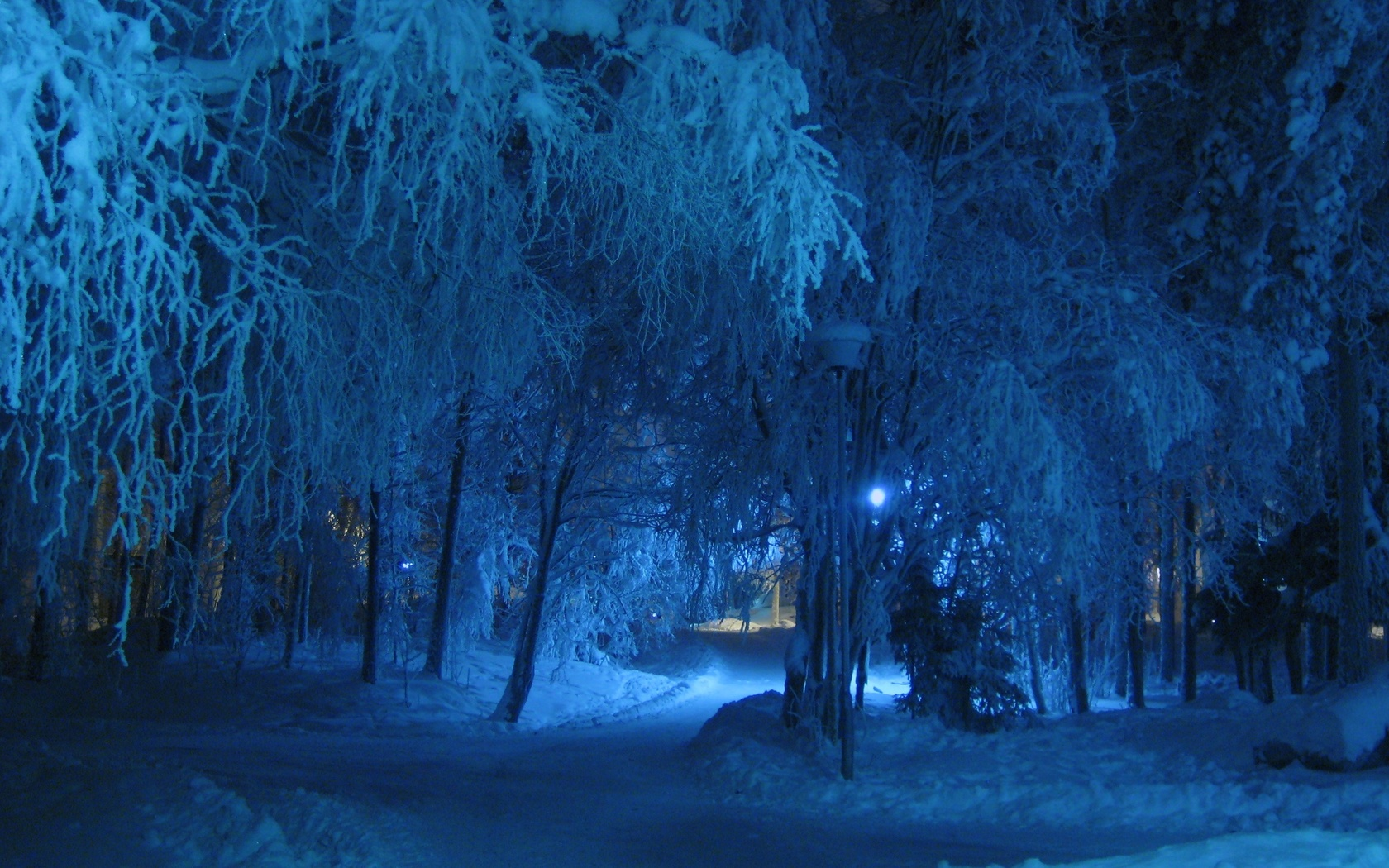 природа, зима, снег, деревья, парк, аллеи, дорожки, ночь