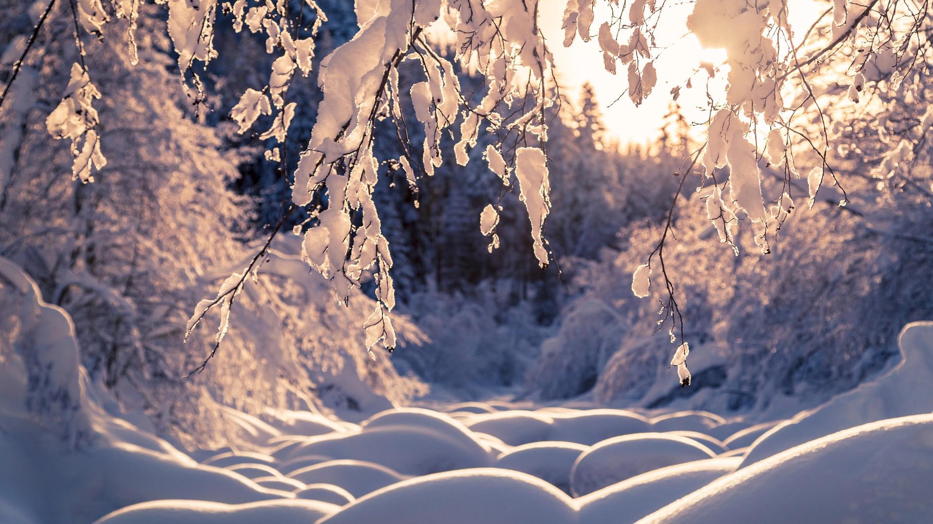 има, лес, снег, деревья, ветки, природа, сугробы, thomas zagler, зима