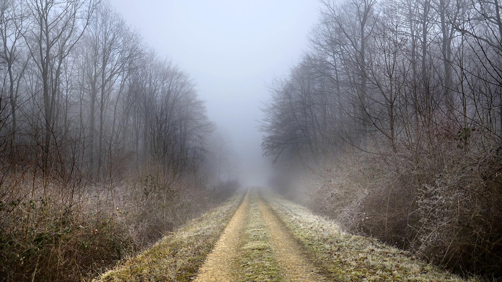 осень, дорога, туман