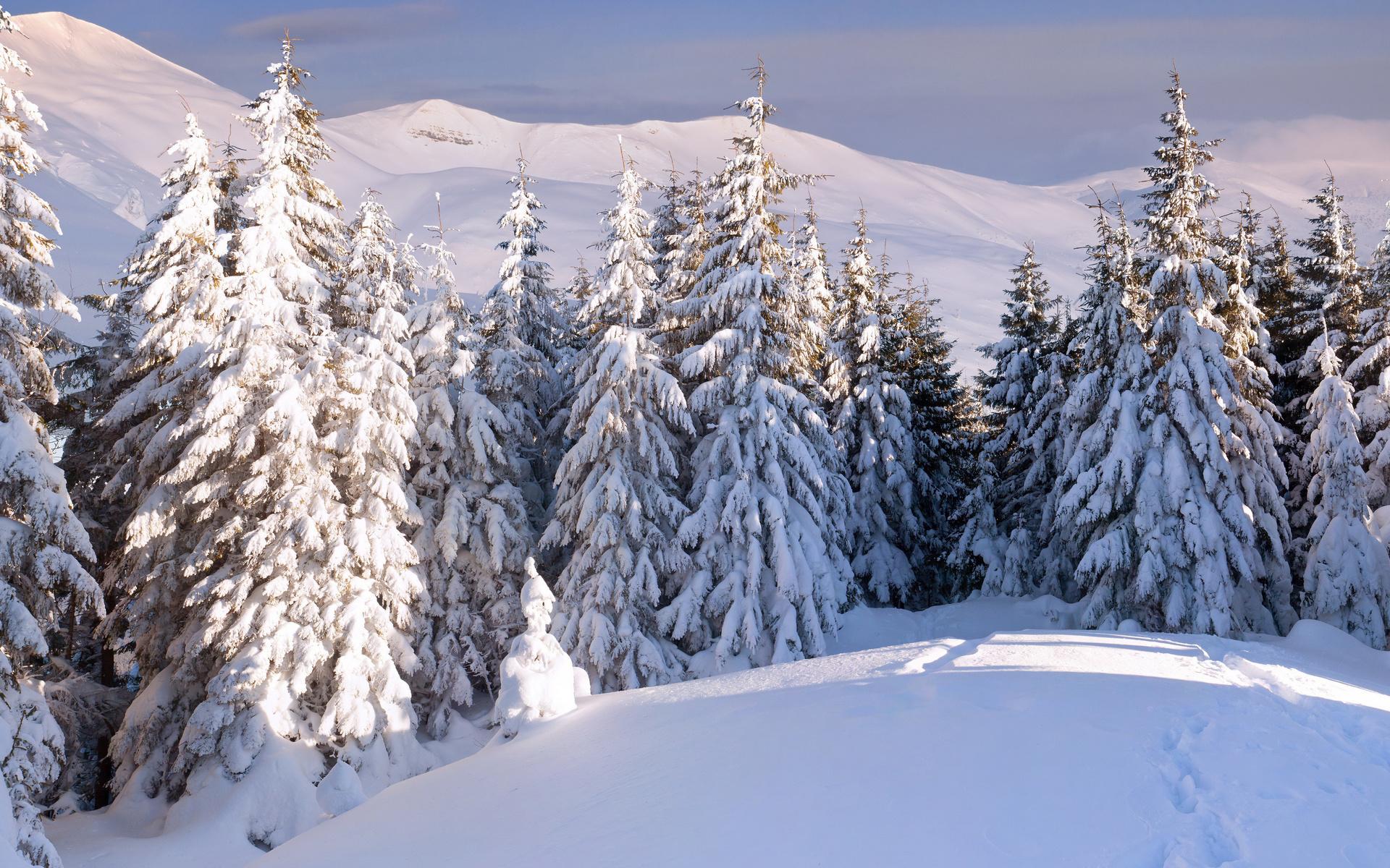 природа, пейзаж, горы, зима, снег, деревья, ели, лес, следы