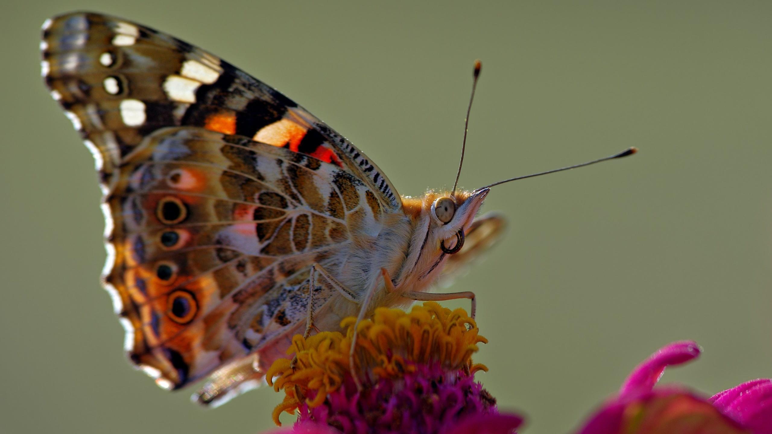 насекомые, макро, цвета, пчела, оса, животные