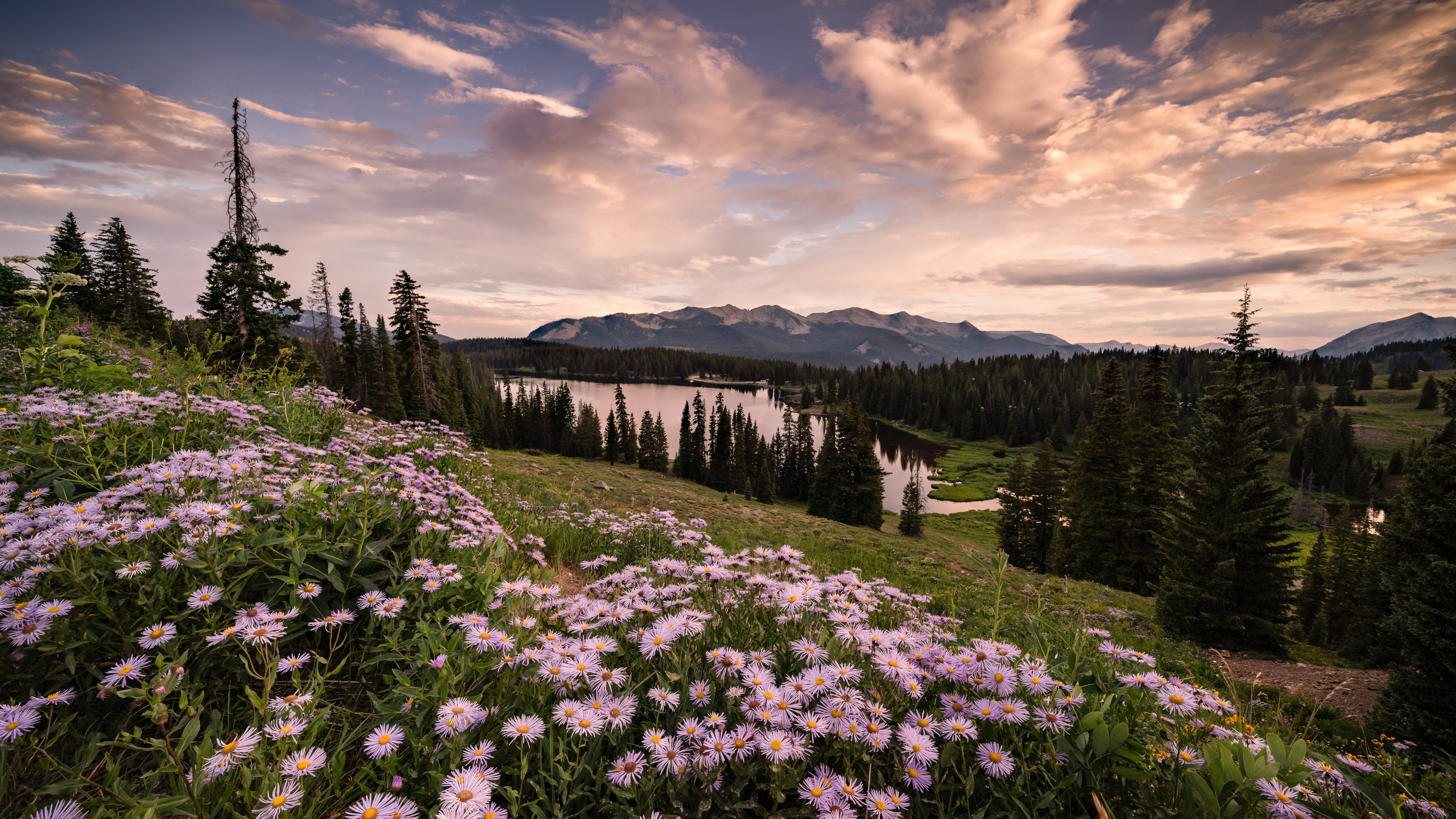 закат, крестед-батт, колорадо, озеро, холмы, деревья, цветы, природа, пейзаж