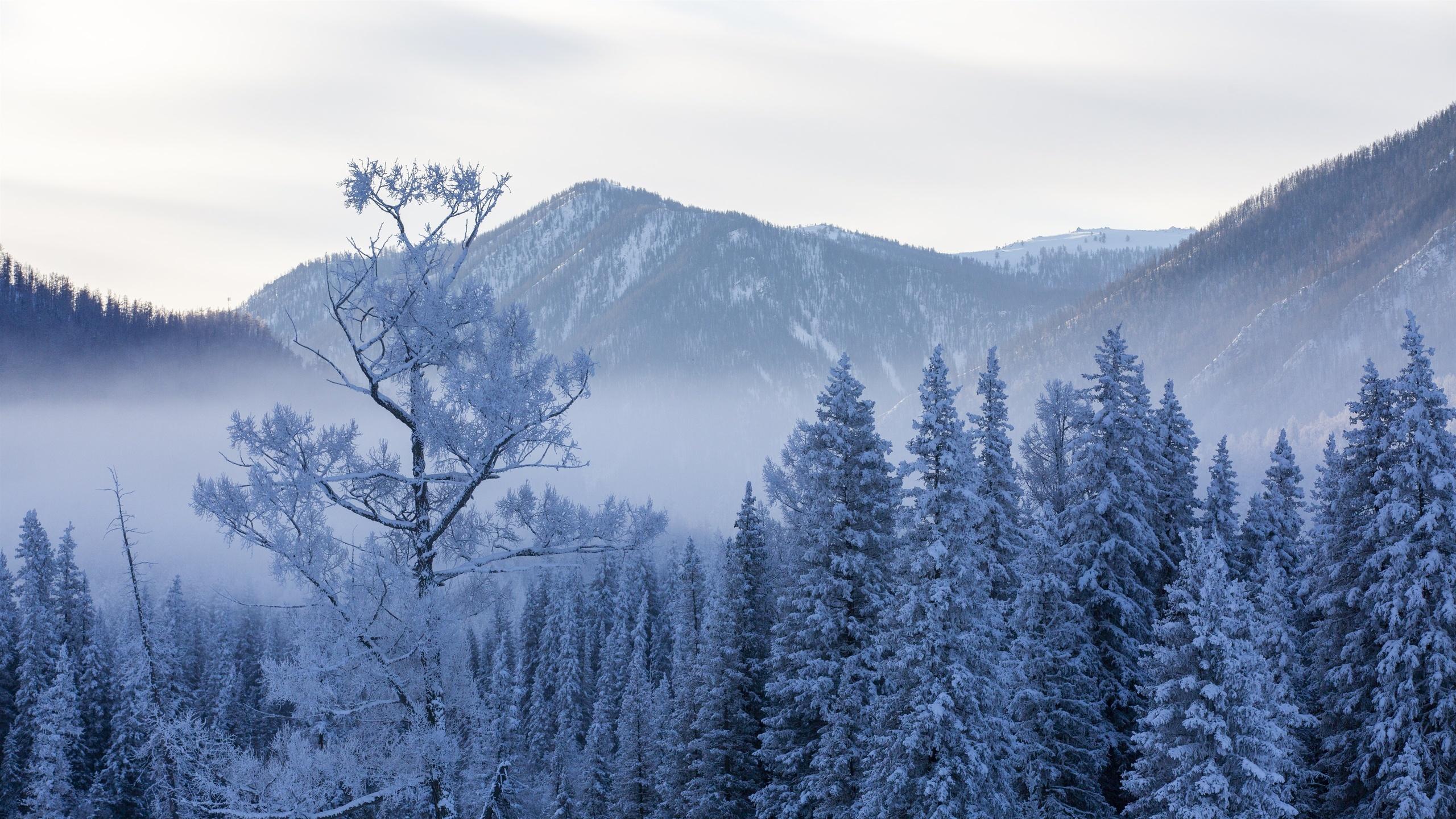 канас, зимой, деревья, снег, пейзаж, природа, китай