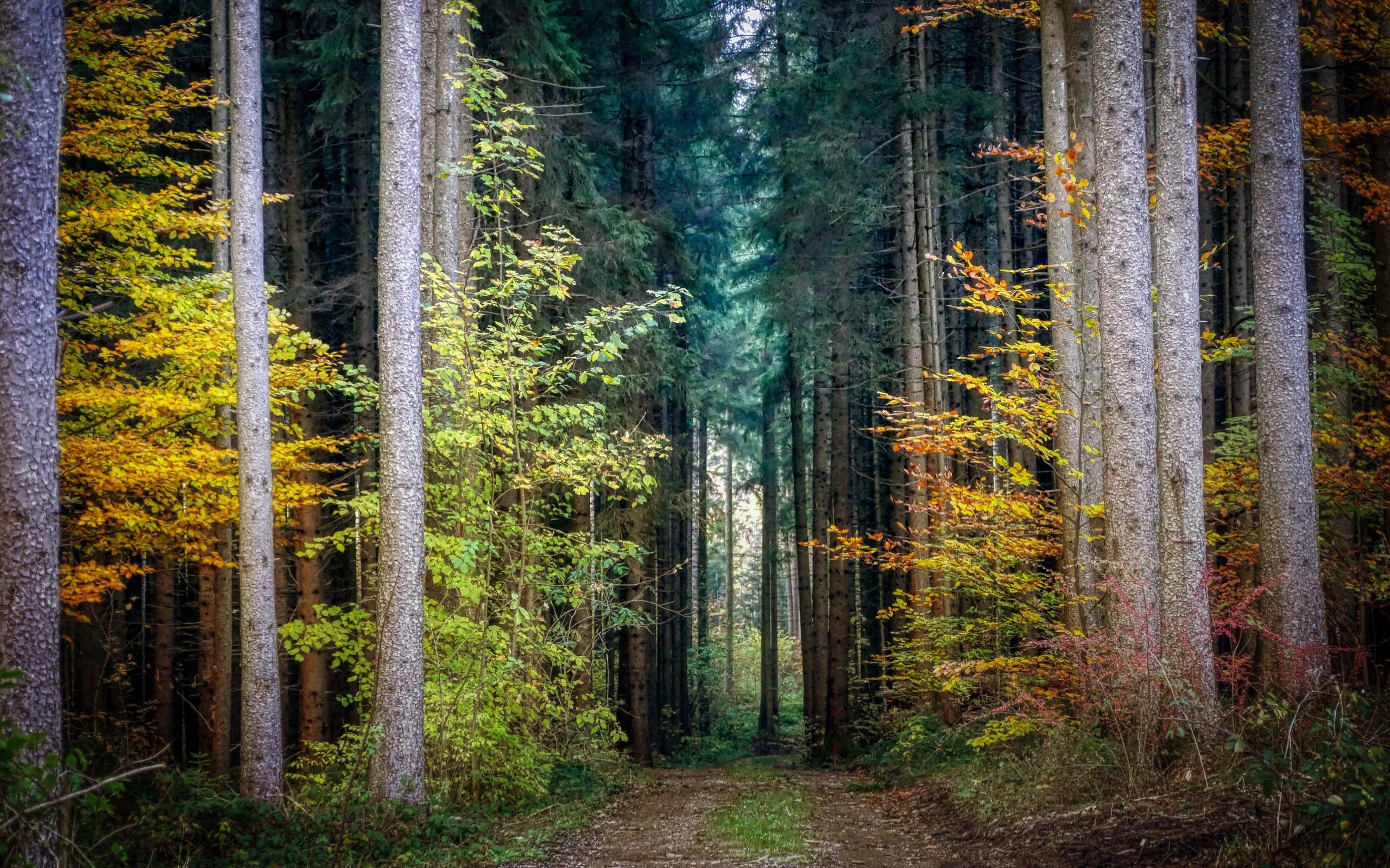 лес, деревья, природа, осень