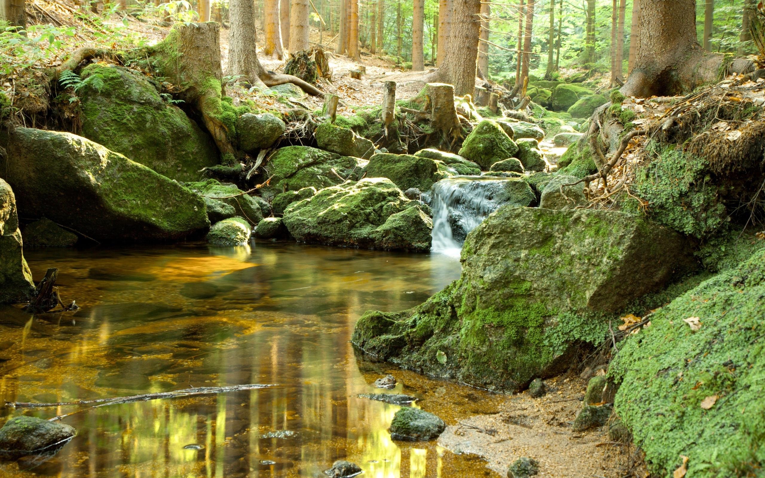 лес, камень, ручей, мох