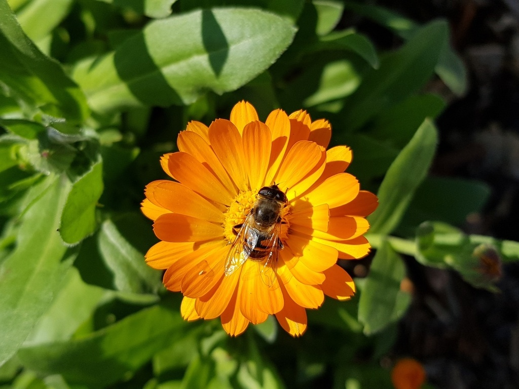 flowers, bees, green, nature, цветы,природа,пчела
