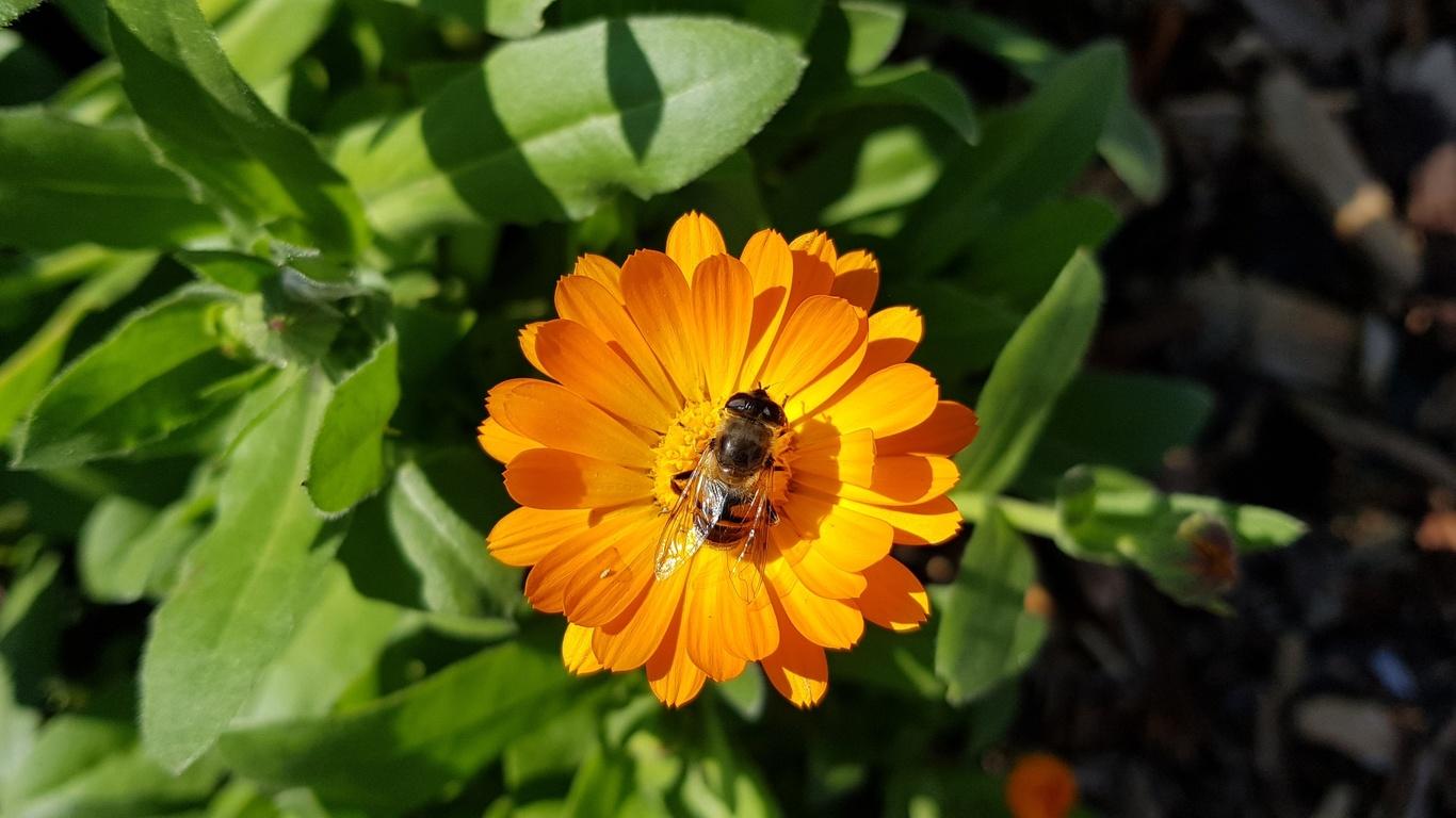 flowers, bees, green, nature, цветы,природа,пчела