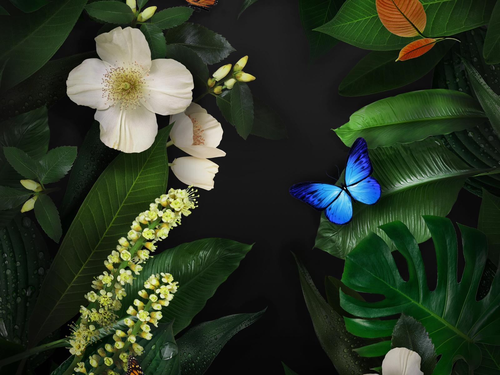 цветы, бабочки