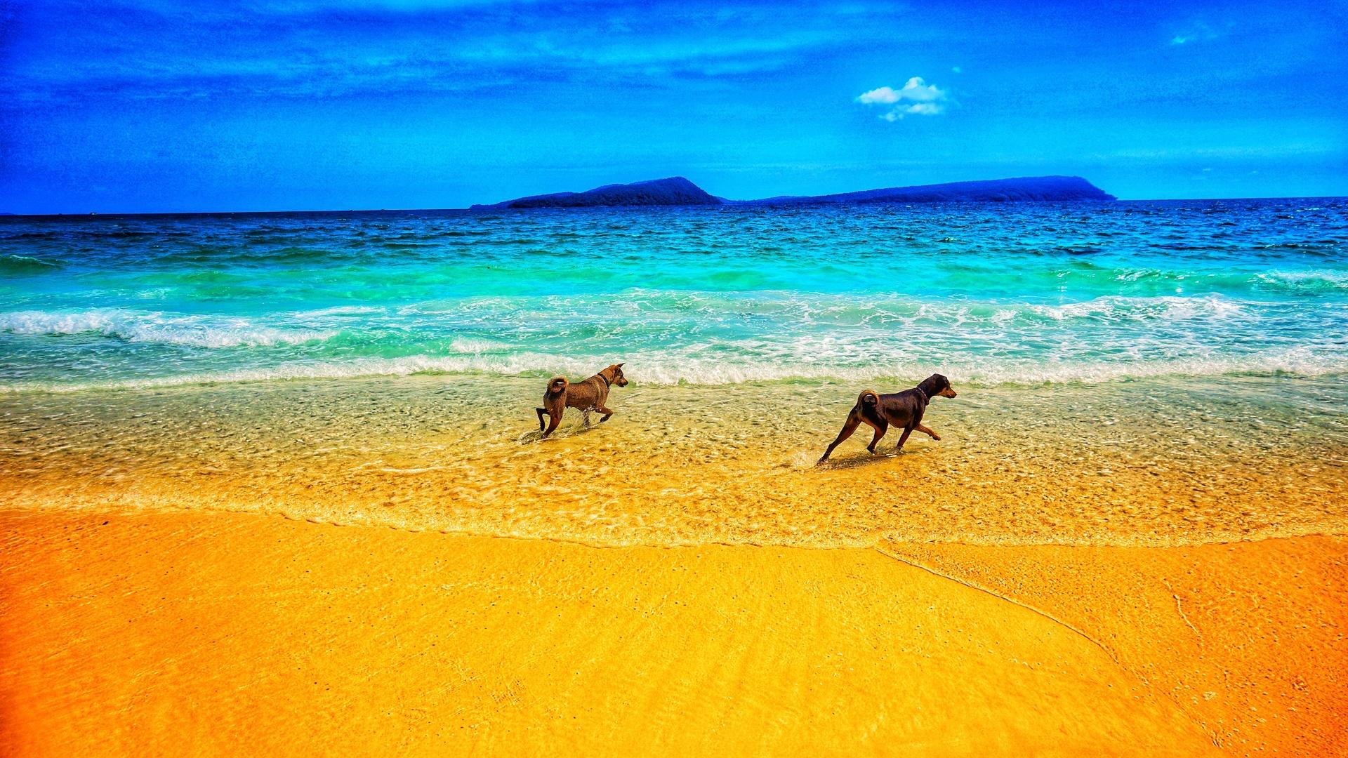 собаки, пляж, море