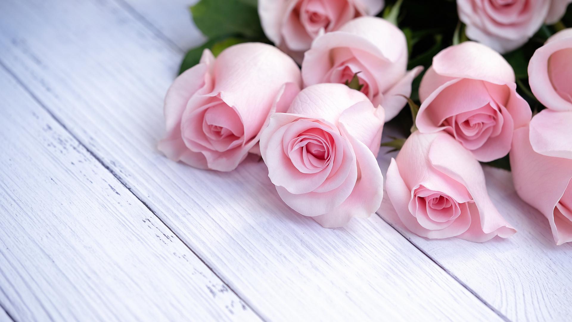 букет, розы, розовый, лепестки, цветы