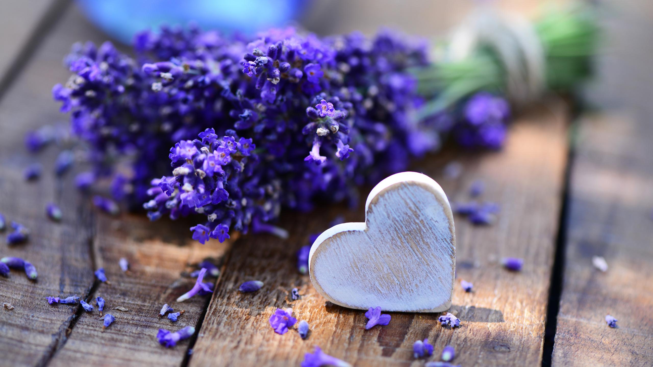 лаванда, фиолетовый, цветы