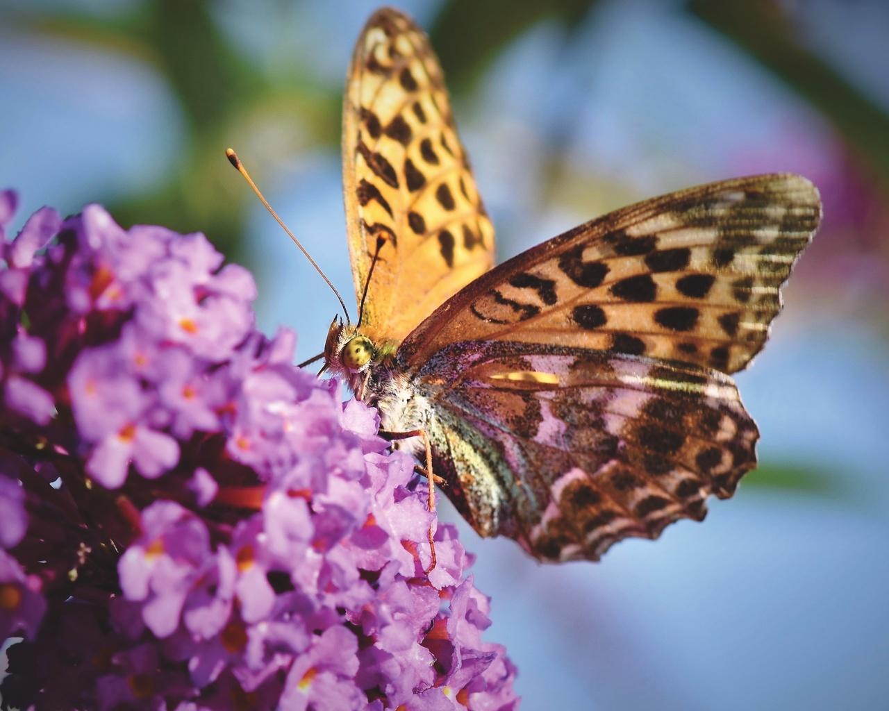 бабочка, крыло, узор