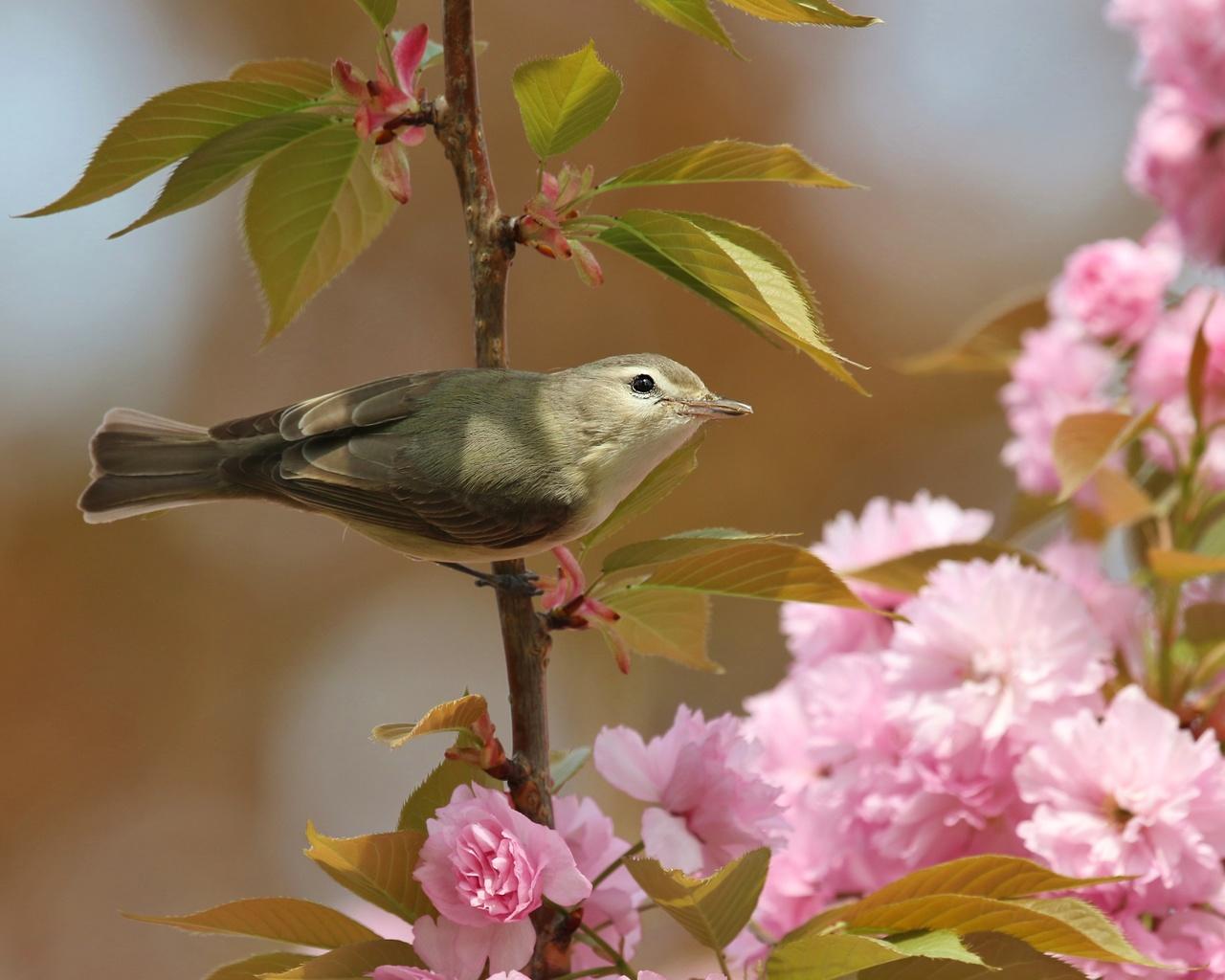 птица, ветки, листья, цветы, сакура, природа, весна, цветение