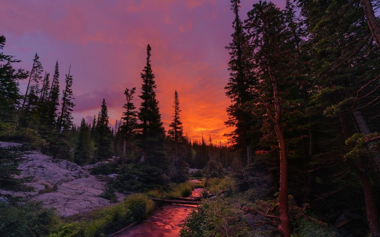 природа, пейзаж, леса, ели, деревья, канада, река, камни, закат