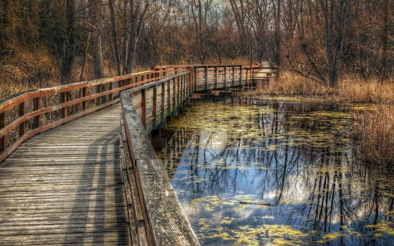 парк, деревья, мост, пруд, осень